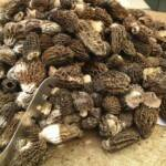 fresh morels at the market