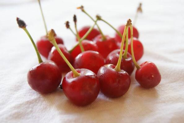 tart sour cherries