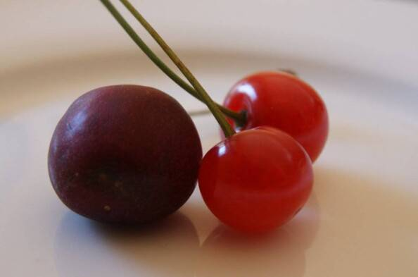 sweet vs tart cherry