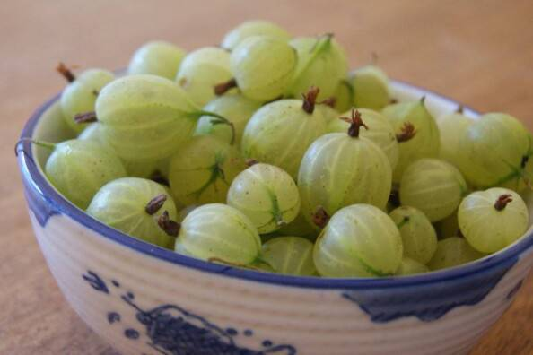 plump gooseberries!