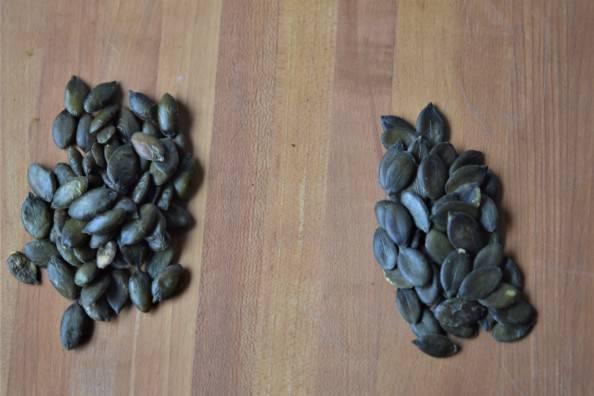 Rancho Vignola pumpkin seeds